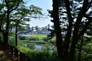 自然あふれる多摩川駅周辺を森林浴してきた