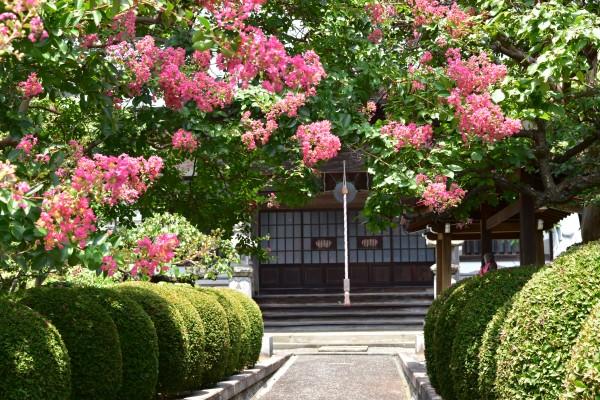 「宮前平」竹林と百日紅をめぐるぶらり夏散歩